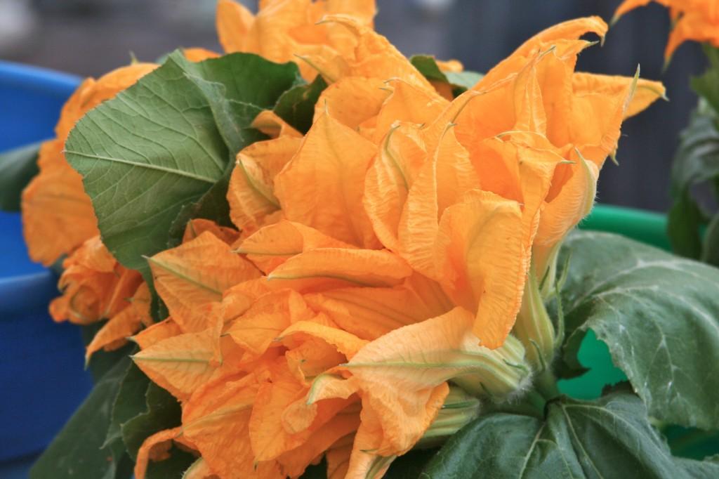 Fleures de courgettes ~ PSandsPhotos